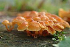 Free Mushrooms Stock Image - 4159251