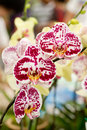 Free Orchids In The Garden Stock Photo - 4165980