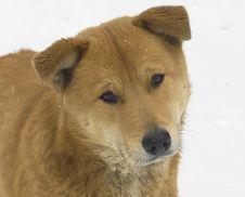 Free Stray Dog Royalty Free Stock Photos - 4160298
