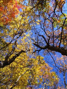 Free Peak Fall Color Season Royalty Free Stock Images - 4160399