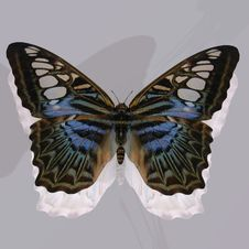 Digital Butterfly Royalty Free Stock Photography
