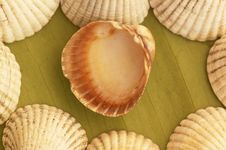 Free Sea Shell Theme Stock Photo - 4163570
