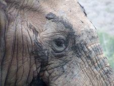 Free Eye Of A Elephant Stock Image - 4163861