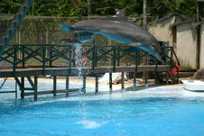 Free Dolphin Show Stock Photo - 4164190