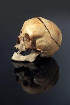 Free Real Skull Royalty Free Stock Photography - 4164957