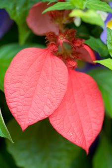 Red Leaves Plant Royalty Free Stock Images