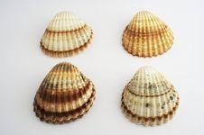 Free Shells Stock Photography - 4165032