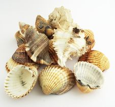 Free Shells Stock Images - 4165034
