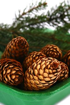 Free Wood Pine Fir Cones Royalty Free Stock Photos - 4165138