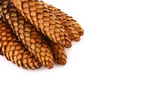 Wood Pine Fir Cones Royalty Free Stock Image