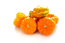 Free Pumpkins And Gourd Stock Photo - 4165290