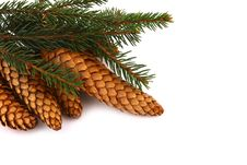 Free Wood Pine Fir Cones Stock Image - 4165341