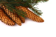 Free Wood Pine Fir Cones Stock Images - 4165414