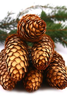 Free Wood Pine Fir Cones Stock Images - 4165434