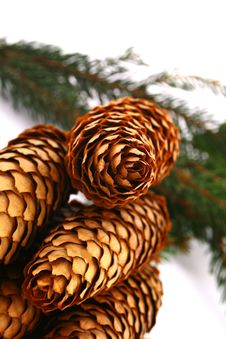 Wood Pine Fir Cones Royalty Free Stock Photography