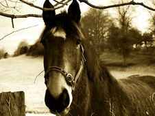 Free Sepia Horse Royalty Free Stock Images - 4166179