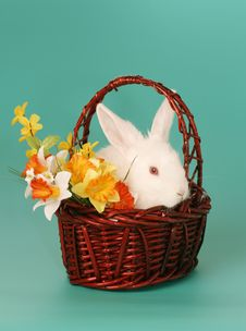 Free Rabbit In Basket Stock Photo - 4169020
