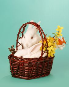 Free Rabbit In Baskett Royalty Free Stock Photos - 4169028