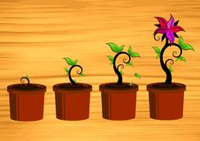Free Floral Growth On Wood Royalty Free Stock Photography - 4169467