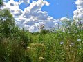 Free Green Meadow Stock Photo - 41630980