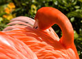 Free Flamingo Stock Photo - 41633990