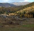 Free Village & Birch Forest Stock Photos - 4174713