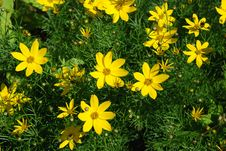 Free Yellow Flowers Stock Photography - 4170742