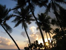 Free Sun Raise And Cocos Tree Stock Photos - 4170833