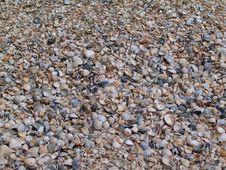 Free Sea Shelly Coast Stock Photo - 4171610
