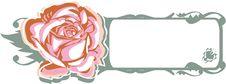 Free Rose Royalty Free Stock Photo - 4172295