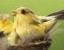 Free Bird On Nest Stock Images - 4172904