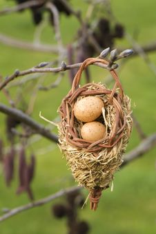 Free Bird Eggs In Nest Stock Photos - 4172983