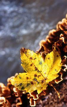 Free Autumn Leaf Stock Image - 4173191