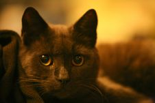 Free Cat Stock Images - 4173514