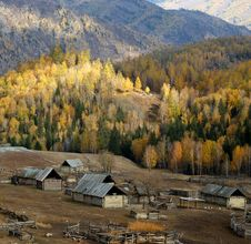 Free Village & Birch Forest Royalty Free Stock Image - 4174726