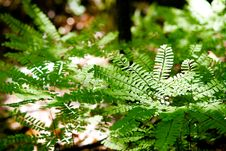 Free Ferns On Forest Floor Stock Photo - 4175160