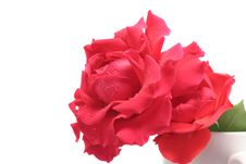 Free Red Rose In A Jar Isolated On White Royalty Free Stock Images - 4176219