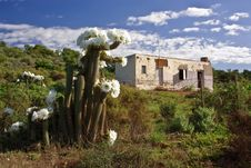 Flowering Cactus Against Desolate Country House Stock Images