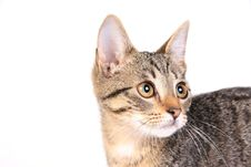 Free Kitten On White 2 Royalty Free Stock Image - 4179836