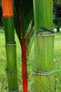 Free Bamboo Trunk Stock Image - 4185781