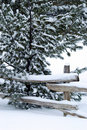 Free Snow Laden Branches Royalty Free Stock Photo - 4189335