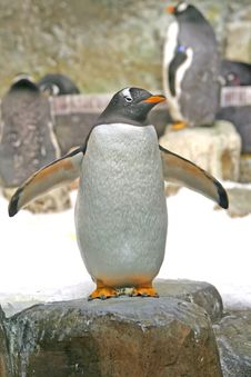 Free Penguin In A Rock. Royalty Free Stock Images - 4180469