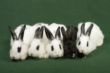 Free Five Rabbits Royalty Free Stock Photo - 4182685