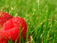 Free Raspberries Stock Image - 4184061