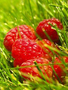 Free Raspberries Royalty Free Stock Photo - 4184065