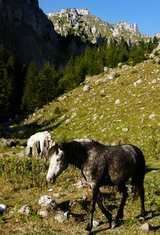 Wild Horse Stock Images