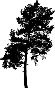 Free Isolated Tree - 7. Silhouette Stock Images - 4185154