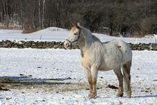 Free White Horse Stock Photos - 4186273