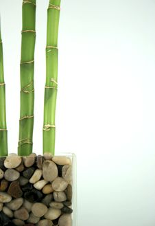 Free Lucky Bamboo Royalty Free Stock Photos - 4187308