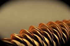 Free Pine Cone Stock Photography - 4188202